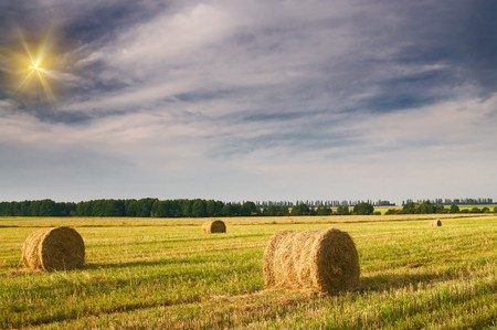 Field full of bales against tender sun in the blue sky. Stock Photo - 7441338