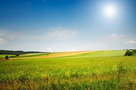 Serene summer meadow and wonderful blue sky. photo