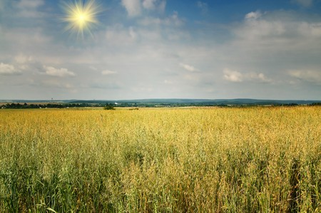 Splendid ukrainian landscape by summertime. Stock Photo - 7441334