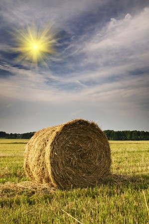 Rural landscape of haystacks. Stock Photo - 7441359
