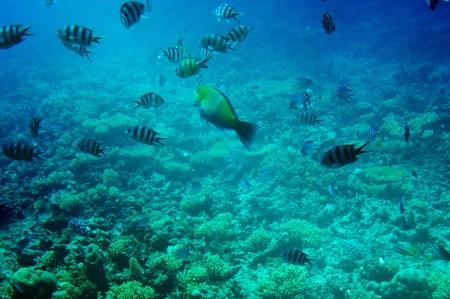 Astonishing undersea world of Red sea. Stock Photo - 7456562