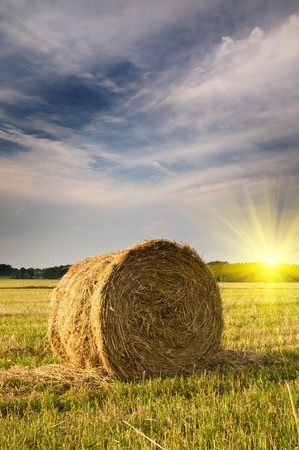 Beautiful stubble field with hay bales by summer. Stock Photo - 7477337