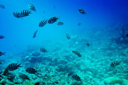 Underwater photo  fish and reef of Red Sea. Stock Photo - 7556313