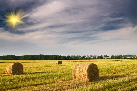 Wheat field - after taking the crop by summertime. Stock Photo - 7556321