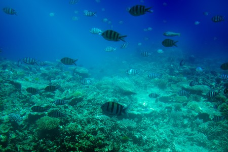 Underwater landscape of Red sea. Stock Photo - 7577089