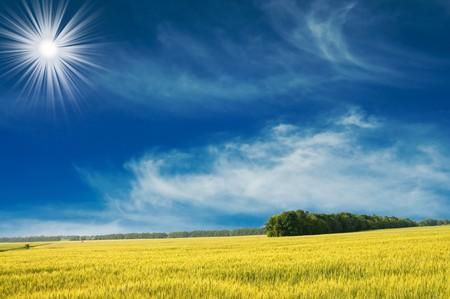 Splendid wheat  field and the blue sky with sun. Stock Photo - 7577082