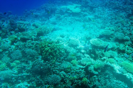 Underwater landscape of Red Sea. Stock Photo - 7681520