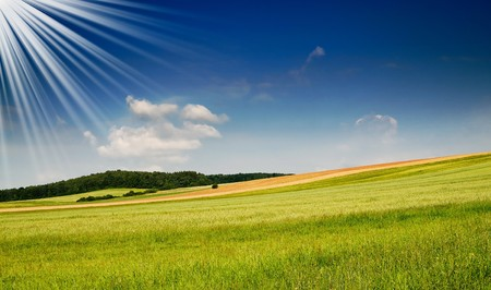 Serene summer meadow and wonderful blue sky. Stock Photo - 7681515