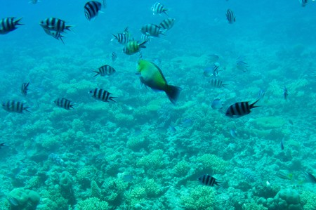 Underwater landscape of Red Sea Stock Photo - 7681544