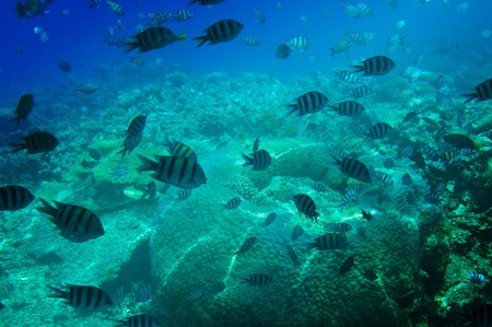 Astonishing undersea world of Red sea. Stock Photo - 7681575