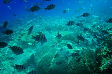 Astonishing undersea world of Red sea. Stock Photo - 7681575
