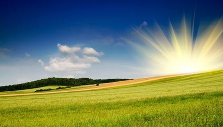 Serene summer meadow and wonderful blue sky. Stock Photo - 7681576