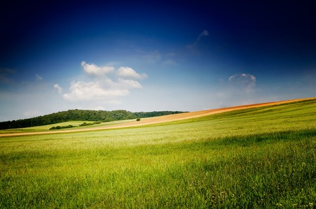 Serene summer meadow and wonderful blue sky. Stock Photo - 7681611