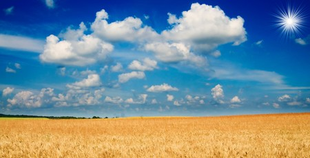 Beautiful golden field of ripe wheat and fun sun by summer. Stock Photo - 7767357