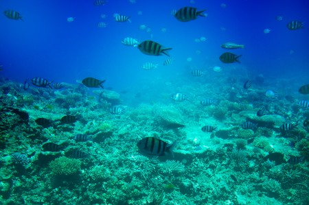 Astonishing undersea world of Red Sea. Stock Photo - 7767384