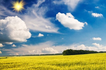 Green wheat and beautiful blue sky. Stock Photo - 7767379