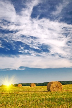 Field full of bales against tender sun in the blue sky.  Stock Photo - 7767383