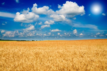 Beautiful golden field of ripe wheat and fun sun by summer. Stock Photo - 7767388