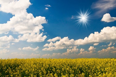 Wonderful rapefield and amazing clouds.