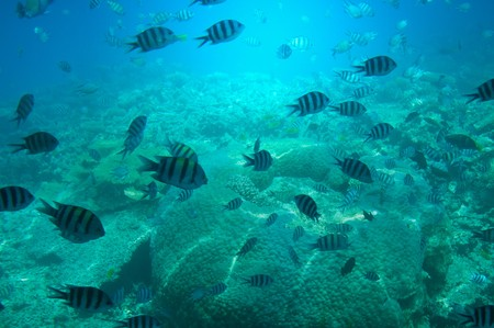 Underwater landscape of Red sea. Stock Photo - 7767402