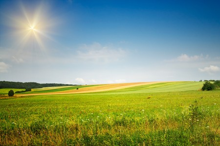 Serene summer meadow and wonderful blue sky. Stock Photo - 7767406
