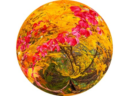 Ball with the autumnal forest. photo