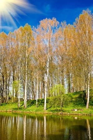 Birch grove,pond and nice birches reflection by springtime. photo