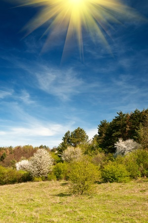 Fun sun and blossom of trees by springtime. Stock Photo - 9184702
