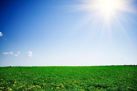 dutch clover: Green clover and beautiful blue sky.