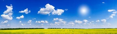 Fine panorama of rapefield and cloudscape.