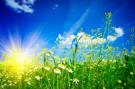 Splendid camomiles against blue sky background. Stock Photo - 9631486