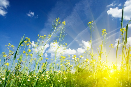 Camomiles field against the blue sky and fun sun. Stock Photo - 9631515