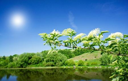 Elderflower and nice river by summer.