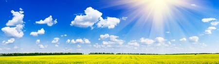 Rapefield de charme et cloudscape avec les rayons du soleil.