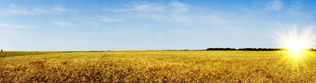 stubble field: Amazing summer landscape with cereals field and fun sun.