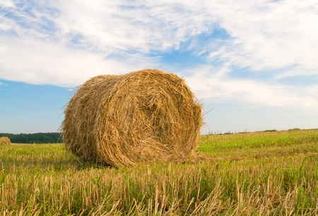 hayloft: Rural landscape of haystacks.