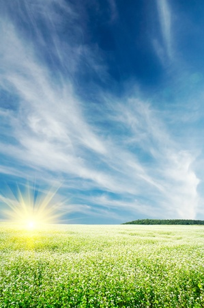Field full of buckwheat and cloudscape with sunbeams. Stock Photo - 10094288
