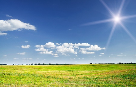 bristly: Empty  bristly field after crop Stock Photo