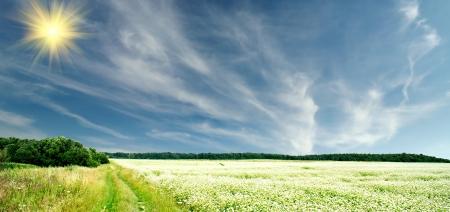 The wonderful field of buckwheat before the rain Stock Photo - 14227837