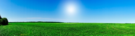 Panorama du champ de soja cultiv�es.