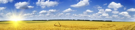 Paysage panoramique avec le champ de c�r�ales Banque d'images