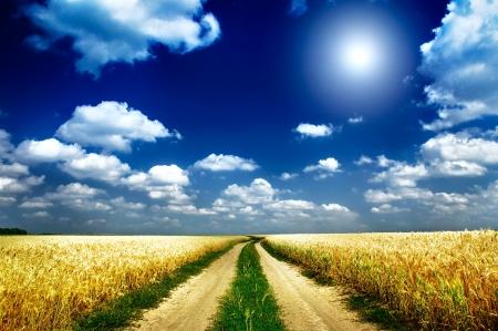 Prachtig uitzicht van gouden tarwe veld door de zomer Stockfoto