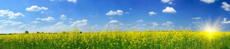 Wonderful panorama of rapefield and cloudscape