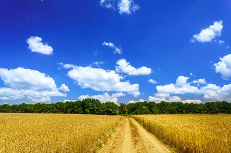 astonishing: Astonishing landscape with cereals field and blue sky.