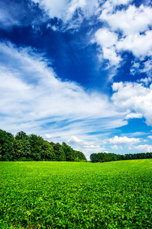 cultivated: Nice cultivated soy field by early summer. Stock Photo