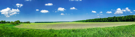 unripened: Nice and wonderful view sown field.