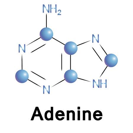adenine: Adenine molecule structure, a medical illustration. Illustration