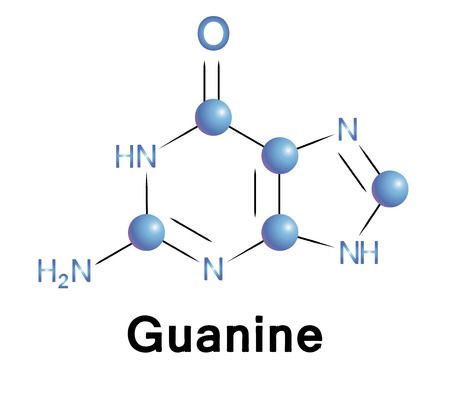 purine: Guanine molecule structure, a medical illustration.