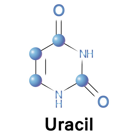 uracil: Uracil molecule structure, a medical illustration.