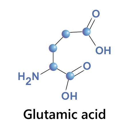 glutamate: Vector illustration, the chemical formula of glutamic acid